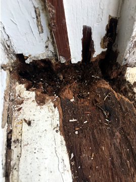 Wet Rot in heritage window.